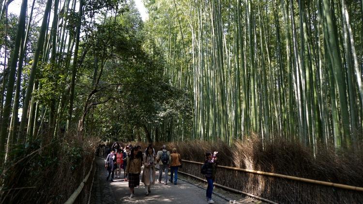 57.5 Japan Kyoto Arashiyama Bamboo Grove
