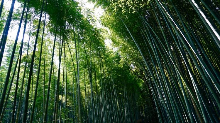 60 Japan Kyoto Arashiyama Bamboo
