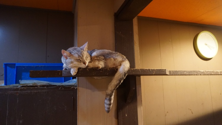 114 Japan Travel Cat Cafe