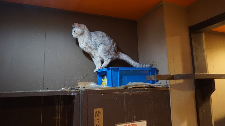 115 Japan Travel Cat Cafe