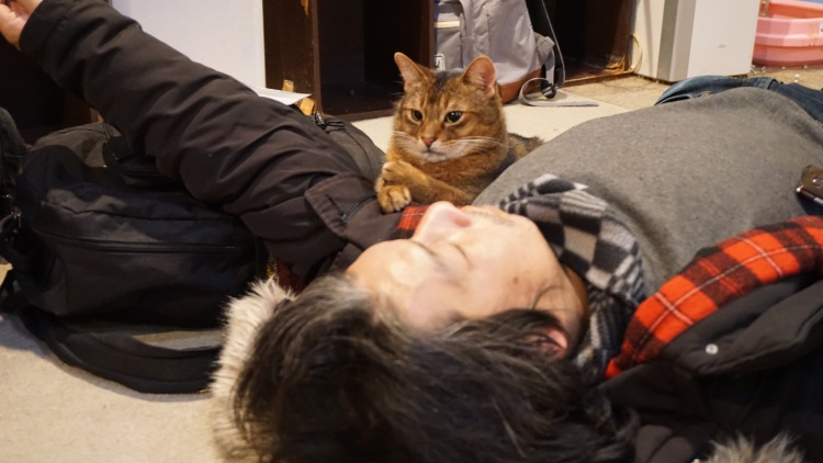 116 Japan Travel Cat Cafe