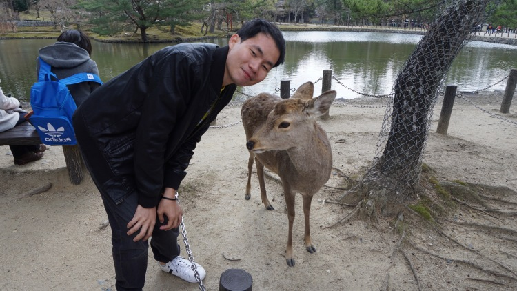 85.9 Japan Travel Nara Deer